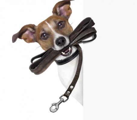 http://www.etoiledebonte.net/wp-content/uploads/2017/04/Apprendre-a-votre-chien-a-ne-plus-tirer-sur-sa-laisse_width1024-454x400.jpg