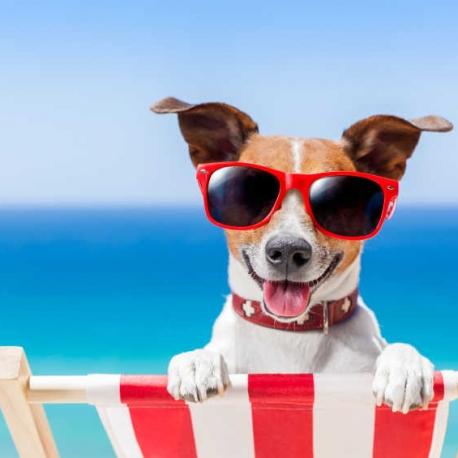 https://www.etoiledebonte.net/wp-content/uploads/2017/04/dog-friendly-holidays-north-devon-458x458.jpg